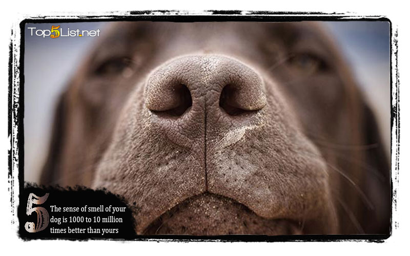 The sense of smell of your dog is 1000 to 10 million times better than yours